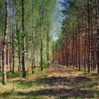 В лесу :: Валерий Козуб
