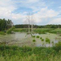 И болото бывает красивым! :: Вера Щукина