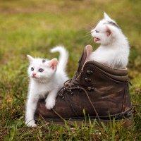 один ботинок на двоих :: Татьяна Исаева-Каштанова