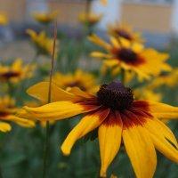 Цветок не нуждающийся в обработке... :: Андрей Туксунов