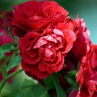 Пик цветения :: ALena Gawrilenko