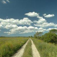 полевая дорога :: Михаил Жуковский