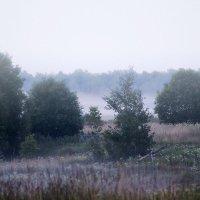 Туман :: Александр