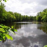 Лесной водоём. природа... :: Антонина Гугаева