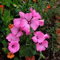 Цветы :: Damir Si