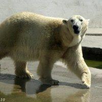 В зоопарке :: Нина Бутко