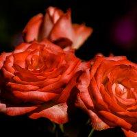 flower_8 :: Trage