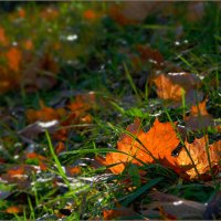 Осенний свет.......... :: Olenka