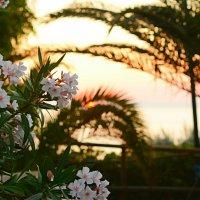 Закат на острове Джильо :: Natalia Kalyva