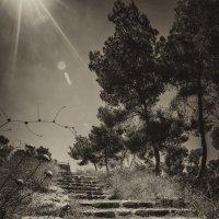 Лесенка на небеса :: Aaron Gershon
