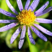 цветочек :: DELEETE DELEETE