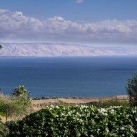 Озеро Кинерет. Израиль. :: Владимир Сквирский