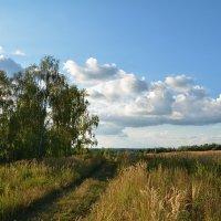 в поле... :: Александр С.