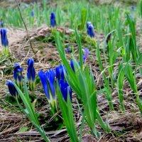 Весна в горах ,в разгаре . :: Любовь Иванова