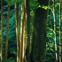 50 shades of green :: Эрика Вольмонтт