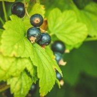 Ягодка, летние витамины.. :: Света Кондрашова