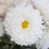 Цветочный хоровод-278. :: Руслан Грицунь