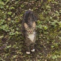 Серый котик :: Aнна Зарубина