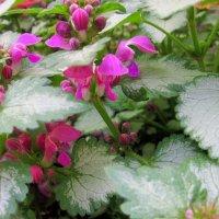 Каждый цветок по своему красив ! :: Мила Бовкун