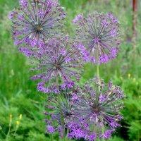Май,цветочный хоровод... :: Тамара (st.tamara)