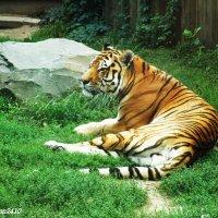 """""""Кошка"""" за стеклом :: Нина Бутко"""