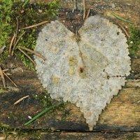 даже природа говорит нам о любви.. :: Анастасия Долгополова