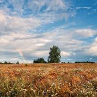 Русское поле :: Михаил Александров