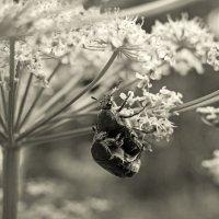 Жизнь жуков. :: сергей лебедев