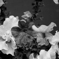 Бархат  цветов... :: Валерия  Полещикова