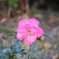 Цветочный хоровод-282. :: Руслан Грицунь