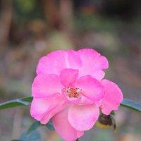 Цветочный хоровод-281. :: Руслан Грицунь