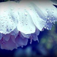 После дождя :: Анастасия Смирнова