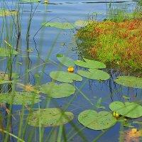 На водной глади озера. :: Николай Масляев