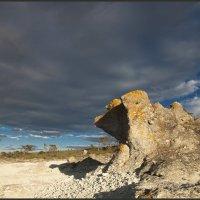 каменный пёс :: liudmila drake