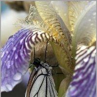 где прячутся бабочки.... :: Алена Белодедова