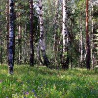 Летнее утро в лесу :: Татьяна Ломтева