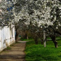 Славный месяц апрель :: Игорь Сикорский
