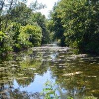 Заброшенный пруд :: Леся Орлова