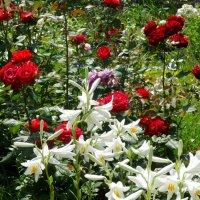В летнем саду... :: Тамара (st.tamara)