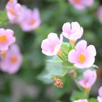 Цветочный хоровод-290. :: Руслан Грицунь