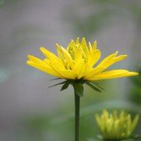 Цветочный хоровод-288. :: Руслан Грицунь