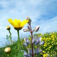весна :: Ефим Журбин