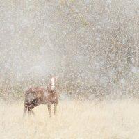 Снежная лошадь :: Денис Соломахин