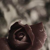 Роза :: Aleksandra Lutko