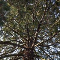 внутри дерева :: Надежда Трофимова