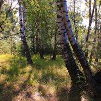 Утро в лесу :: Татьяна Ломтева
