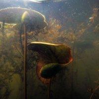 Подводный мир :: Катерина Камышева