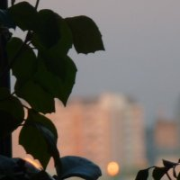 За окошком Москва вечерняя :: Калмакова Марина