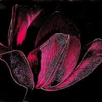 Тюльпан в ночи :: Нина Корешкова