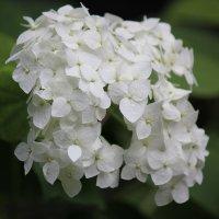 Цветочный хоровод-293. :: Руслан Грицунь